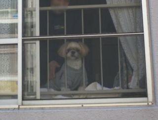 窓際のムーグ