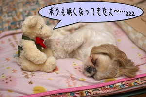 クマさんと寝る1