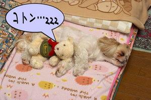 クマさんと寝る2