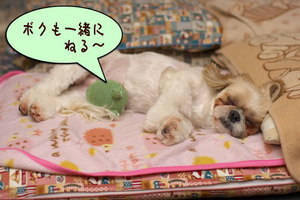 カエルと寝る1