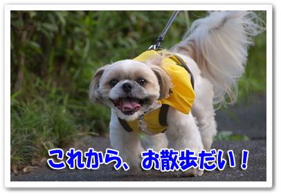 これからお散歩だい!