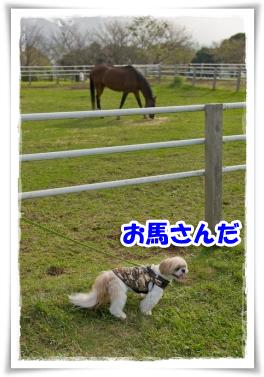 お馬さんだ