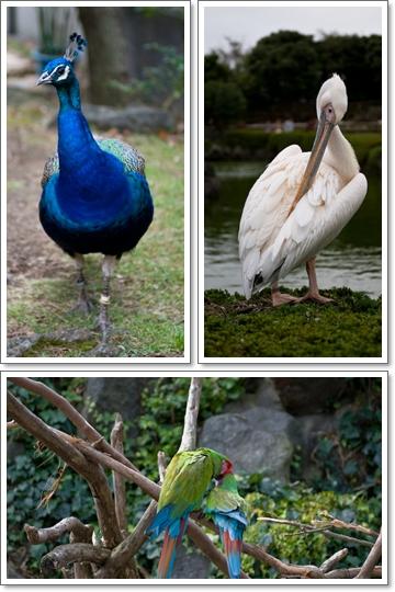 シャボテン公園の鳥さん達