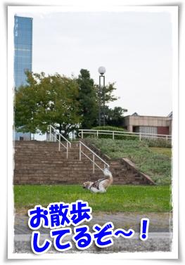 公園で走る!