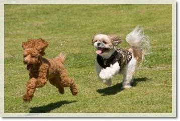 いつものストーカー犬です