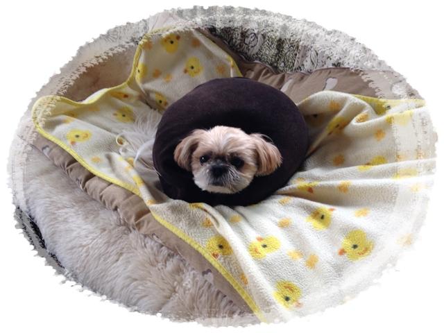 首枕の正しい使い方