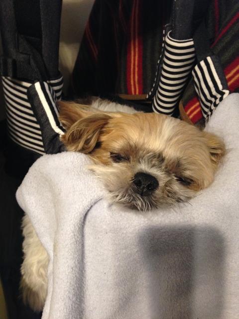 眠り続けたムーグ
