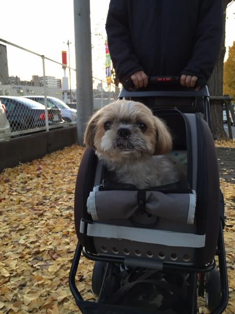 パパとカートでお散歩
