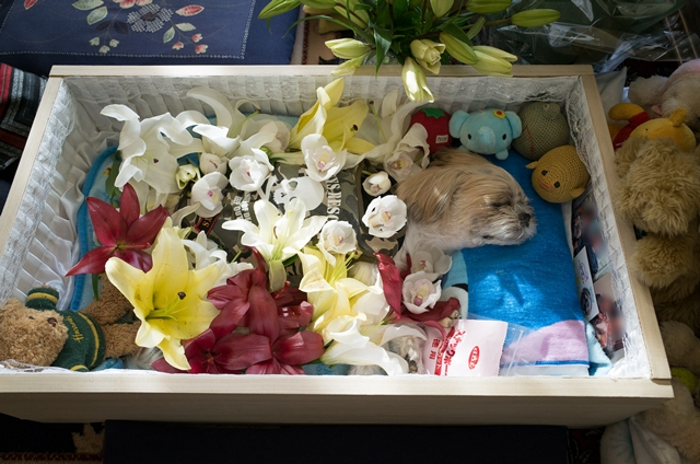 棺で眠るムーグ